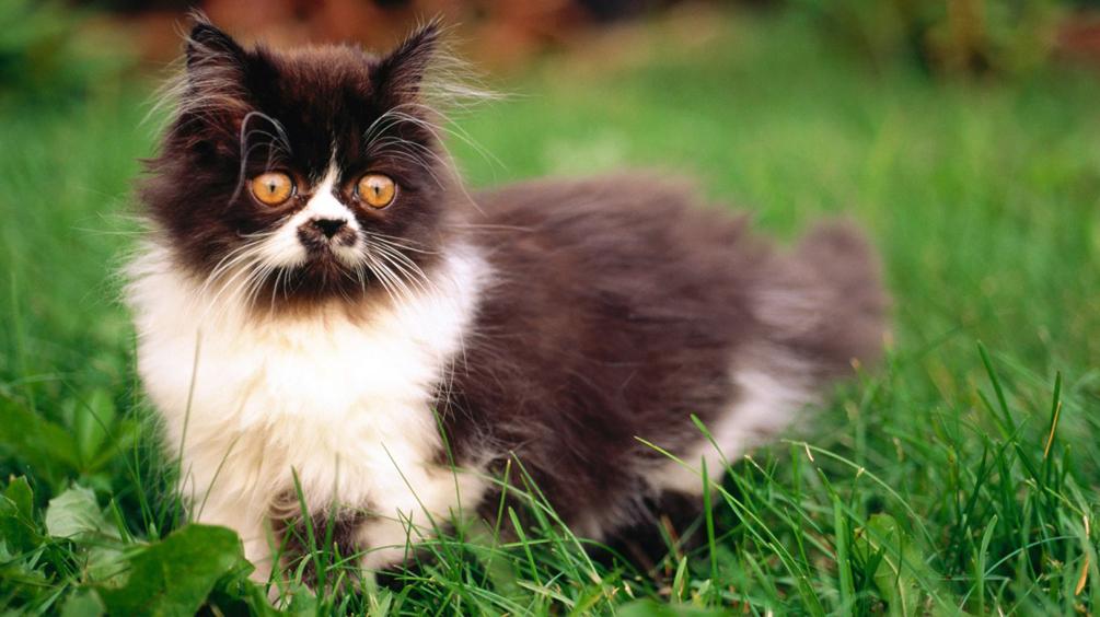 НЕЙРОСЕТЬ сеть научили прогонять кошек со двора